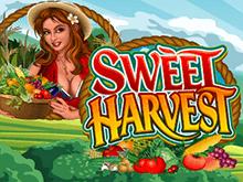 Sweet Harvest – игровой автомат