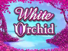 White Orchid играть онлайн